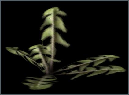Plants  C